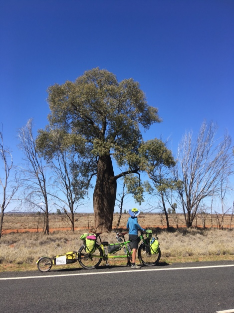 The Bicycle Pedlar - cycle touring Augathella to Charleville